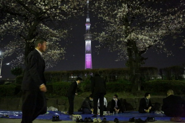 People enjoy the time with colleagues under the cherry blossoms trees at Ueno park in Tokyo, Japan.  During cherry ...