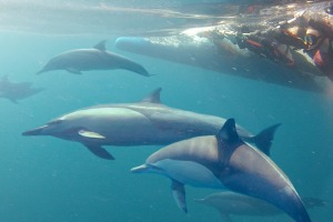 Swimming with the dolphins.