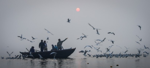 This photo was taken at sunrise on a very foggy morning on the Ganges River at Varanasi, India. Hundreds of seagulls ...