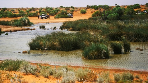 Purnie Bore, the last surface water before entering the dunes of the Simpson Desert from the west, South Australia.