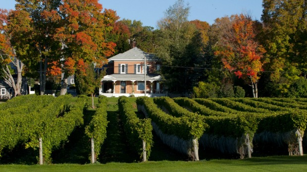 Stately mansions and raked vineyards in Prince Edward County.