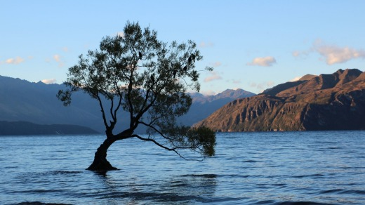 The Wanaka tree – the star of a million lake photos.