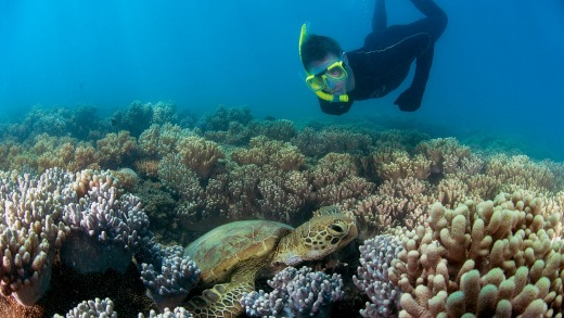 Snorkelling with turtles at the Low Isles.