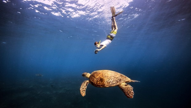 Swimming with a turtle in the Coral Sea.
