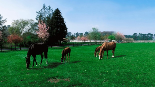 The National Stud in county Kildare, Ireland was established in 1900 by Colonel William Hall Walker, friend to the ...
