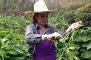 The Royal Project aims to fight deforestation and poverty in Thailand.