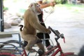 Monkey performances are among the cruellest wildlife attractions, a report says.