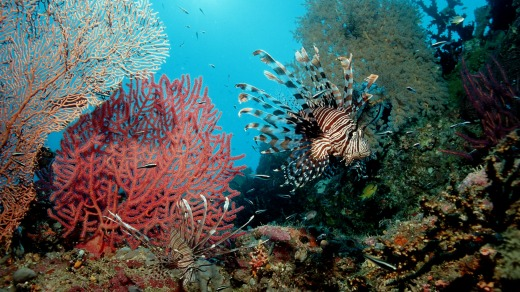 Walking underwater provides an opportunity to see coral and tropical fish up close.