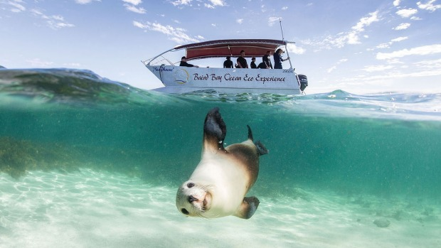 Under the sea: A seal poses for the camera.