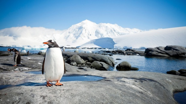 Chill out with penguins when the cruise hits Antarctica.