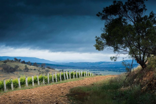 Mount Majura Vineyard: Ski bunnies who fancy tempranillo should beat a path to this winery right on the Majura Parkway, ...