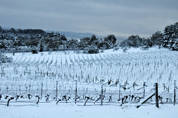 Lark Hill Winery: At an altitude of 860m on the Lake George escarpment, this is one very cool vineyard and a splendidly ...
