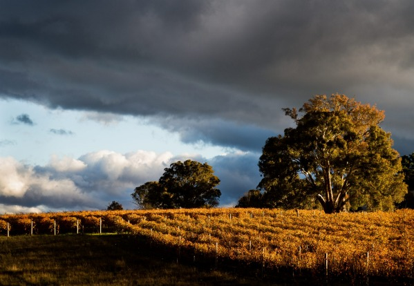 Clonakilla: The largest collection of Canberra District wineries is in the Murrumbateman region and the man who first ...