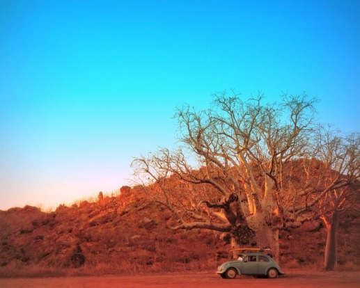 When visiting my son in Kununurra we finally ventured - just before my flight home - to THE boab tree he promised would ...