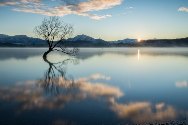 That tree. In Wanaka. At sunrise.