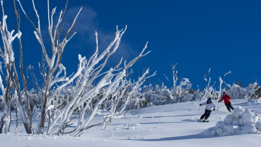 In the powder on the Backcountry Tours at Falls Creek.
