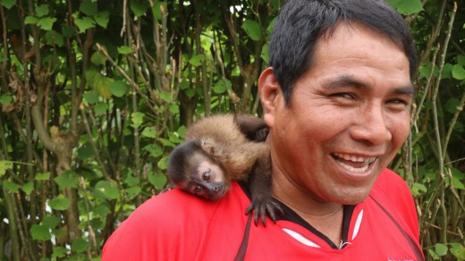 Man and monkey – the orphaned capuchin monkey rescued from the rainforest, now  a pet.