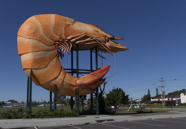 THE BALLINA PRAWN FESTIVAL: In Ballina on the NSW north coast, it's prawns rather than tuna that get the royalty ...