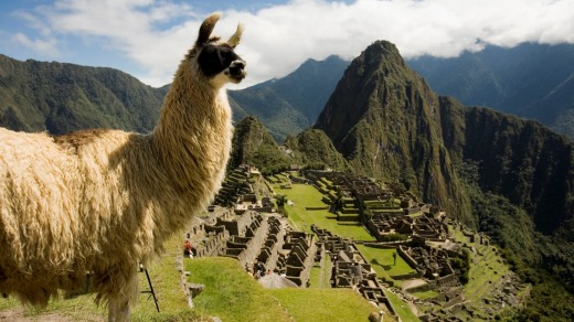 Two of Peru's best known attractions: a llama and Machu Picchu.