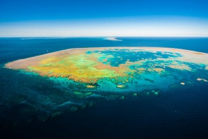 The Great Barrier Reef around Hamilton Island has been unaffected by the bleaching that has hit other parts of the ...