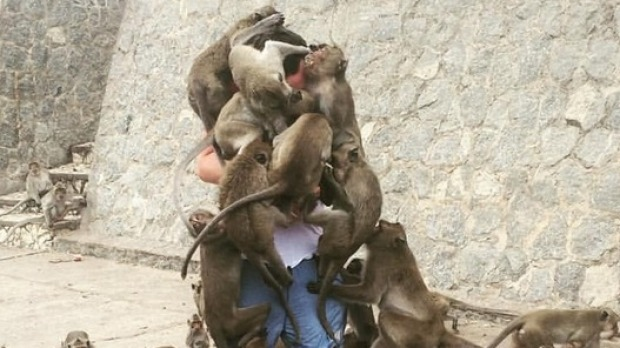 Why Tourists Shouldn T Feed Monkeys Man Mobbed By Monkeys