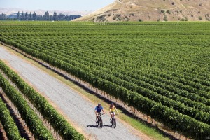 Easy riders: Touring through the vineyards of Gimblett Gravels in Hawkes Bay.