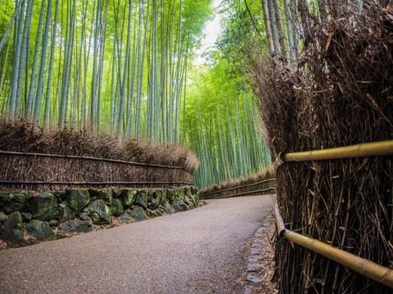 The tranquil bamboo pathway in Arashyama, Kyoto, Japan.