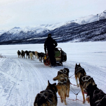 Dog sledding is a great way to experience the Abisko National Park.