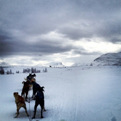 Exploring via dog sled.