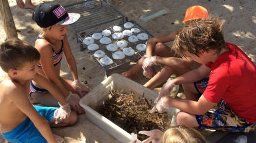 Youngsters help with coral rehabilitation.