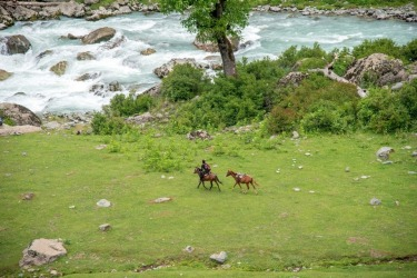 A local Nomad with his ponys running to water in Lidder valley, Kashmir.