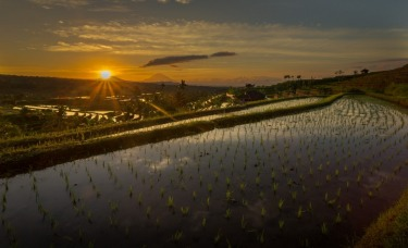 An early morning adventure saw me rise at 4.30am to take a 1 hour car ride to the UNESCO Jatiluwih Rice Terrace in Bali, ...