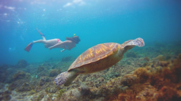 Swimming with turtles at Old Settlement Beach.