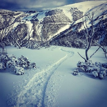 Smashing laps in the Hotham trees #skimaxholidays #misssnowitall