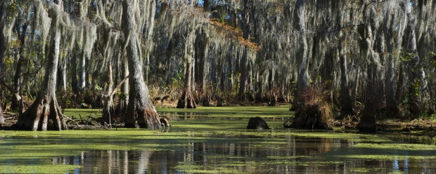 What lurks in the swamps of New Orleans?