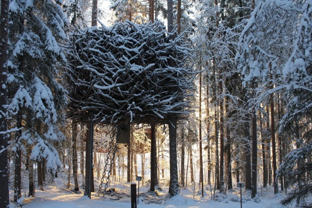 The Bird's Nest blends in with its surroundings.