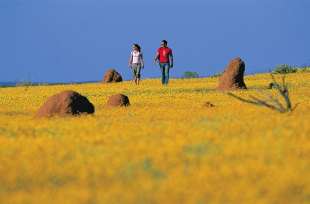 Wildflower season in Mullewa, Western Australia.