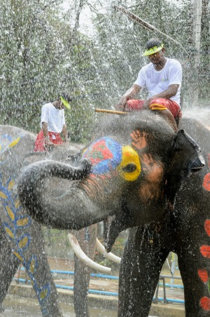 Elephants in the city of Ayutthaya are in on the fun.