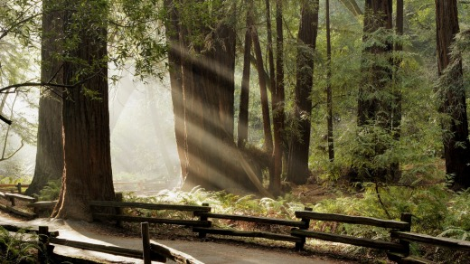 Muir Woods National Monument, California.