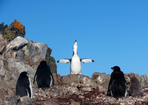 Preaching to his flock or just enjoying the sunshine on a perfect Antarctic day.