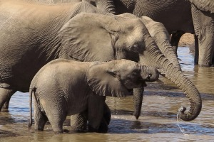 Botswana has about 130,000 elephants nationwide and will allow 272 to be killed in 2020.