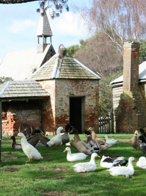 The pet farm at Brickendon Estate in Tasmania.