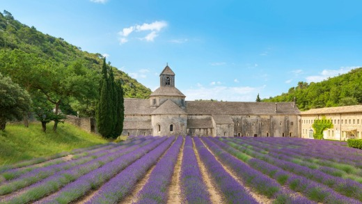Lavender fields in full bloom in early July in front of Abbaye de Senanque Abbey, Vaucluse, Provence-Alpes-Cote d'Azur, ...