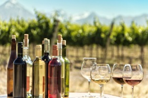 A vineyard in the famed Mendoza region of  Argentina.
