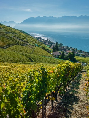 The vine terraces in Vaud, Switzerland can be traced back to the 11th century.