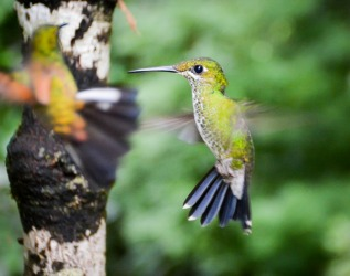 During a visit to the Monteverde Cloud Forest in Costa Rica we visited a Hummingbird garden in which hundreds of birds ...