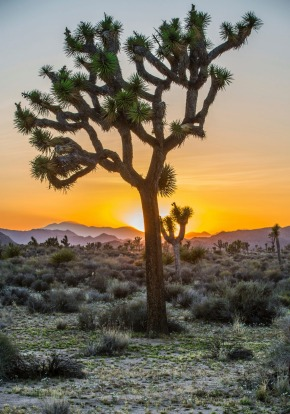 JOSHUA TREE, CALIFORNIA, US  WHAT IS IT A national park in south-eastern California.  FEEL-GOOD MOMENT Experiencing the ...