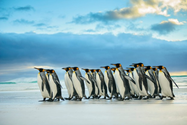 ANTARCTICA  WHAT IS IT Southernmost continent, site of the South Pole.  FEEL-GOOD MOMENT Having a king penguin peck your ...
