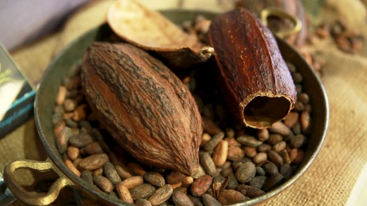 Cacao pods and beans.