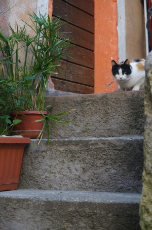 One of the many cats which have made Calcata their home.